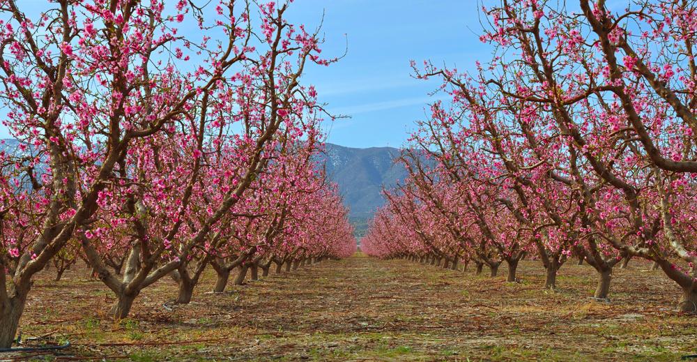 Bud Bionics Orchard