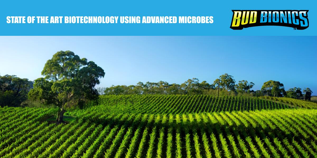 Bud Bionics Biotechnology